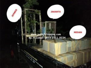 bibit durian bawor bogor, bibit durian bawor jakarta, bibit durian bawor bandung, www.jualbibitdurian.com , Bp.H Tovix 0813 2711 9234