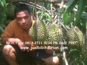 Pohon Durian Bawor, Bp.H.Tovix 0813 2711 9234, www.jualbibitdurian.com