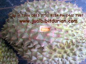 Buah Durian Bawor, Bp.H.Tovix 0813 2711 9234, www.jualbibitdurian.com