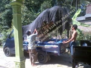 Bibit Durian Bawor Madura www.jualbibitdurian.com