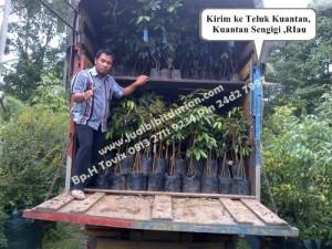 Bibit Durian Bawor Sumatra, Bp.H Ismail 0813 2711 9234