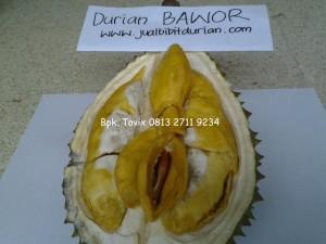 Durian Bawor, Durian Bhinneka Bawor, Bpk. Tovix 0813 2711 9234, www.jualbibitdurian.com