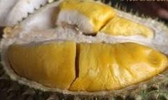 Durian Musang King..