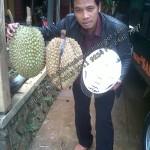 durian bawor, www.bibitdurianbawor.blogspot.com