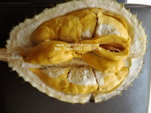 Bibit Durian Bawor, Bibit Durian Bhineka Bawor, Montong ORanye, Bpk. Tovix 0813 2711 9234, www.jualbibitdurian.com