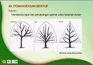 Pemangkasan Durian