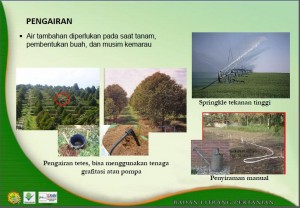 Pengairan Durian Litbang Pertanian