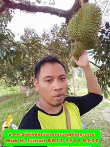 jual-bibit-durian-musang-king-di-jakartajual-bibit-durian-musang-king-di-bogor-daftar-harga-bibit-durian-musang-king-jual-bibit-durian-musang-king-di-medan