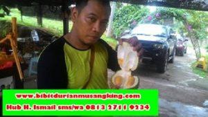 bibit-durian-musang-king-semarang-bibit-durian-musang-king-trubus-bibit-durian-musang-king-kaki-tiga