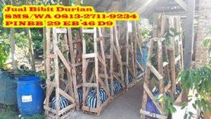 Packing Bibit durian bawor, packing bibit durian musang king, packing bibit durian montong