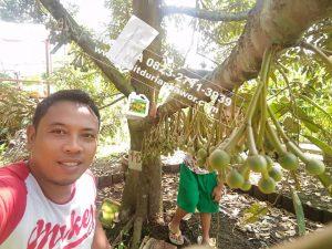 Durian Bawor Berbuah