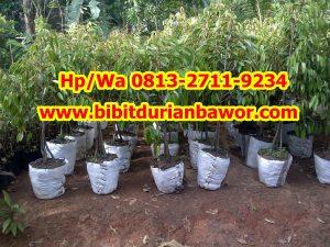 HpWa 0813-2711-9234, Harga Durian Bawor, Bibit Durian Bawor Kaki 4.jpg