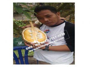 Wa 0813-2711-9234, Durian Bawor Malang, Prospek Budidaya Durian Bawor