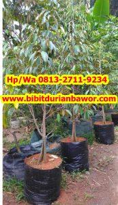 HpWa 0813-2711-9234, Jual Bibit Durian Bawor, Bibit Durian Bawor Di Bogor.jpg