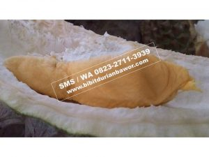 Wa 0813-2711-9234, Harga Buah Durian Bawor, Jual Bibit Durian Bawor