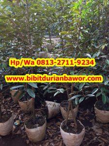 HpWa 0813-2711-9234, Harga Durian Bawor, Contoh Bibit Durian Bawor.jpg