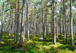 hutan trenggalek