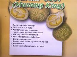 durian 1