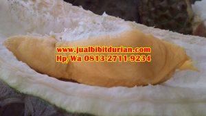 HpWa 0813-2711-9234, Harga Bibit Durian Musang King, Jual Bibit Durian Bawor, Salatiga H. Tovix.JPG (9)