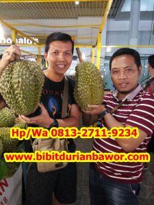 HpWa 0813-2711-9234, Jual Bibit Durian Bawor, Durian Bawor, Kutai Barat H. Tovix.jpg