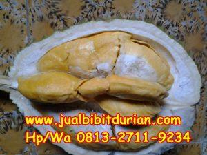 HpWa 0813-2711-9234, Jual Bibit Durian Merah, Jual Bibit Durian Musang King, Sragen H. Tovix.JPG (6)