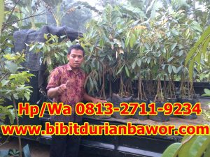 HpWa 0813-2711-9234, Jual Bibit Durian Merah, Jual Bibit Durian Musang King, Sragen H. Tovix.jpg (2)