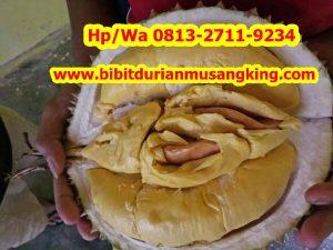 HpWa 0813-2711-9234, Jual Bibit Durian Montong, Bibit Durian Kaki 3, Mahakam Ulu H. Tovix.jpg (2)