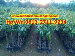 HpWa 0813-2711-9234, Jual Bibit Durian Semarang H. Tovix.JPG (2)
