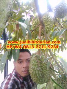 HpWa 0813-2711-9234, Jual Bibit Durian Unggul, Bibit Durian Musang King Asli, Tegal H. Tovix.jpg (2)