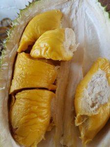 HpWa 0813-2711-9234, Jual Bibit Durian Unggul, Bibit Durian Musang King Asli, Tegal H. Tovix.jpg