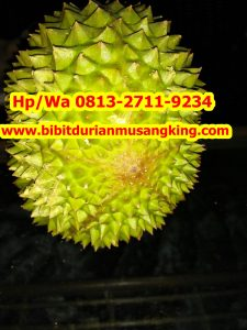 HpWa 0813-2711-9234, Jual Bibit Durian Unggul, Bibit Durian Musang King Asli, Tegal H. Tovix.jpg (8)