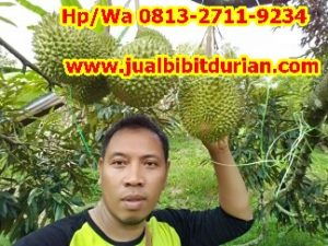 HpWa 0813-2711-9234, Jual Durian Bawor, Bibit Durian Unggul, Kutai Kartanegara H. Tovix.JPG (5)