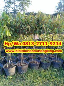 HpWa 0813-2711-9234, Jual Durian Montong, Bibit Durian Musang King, Balikpapan H. Tovix.jpg (3)