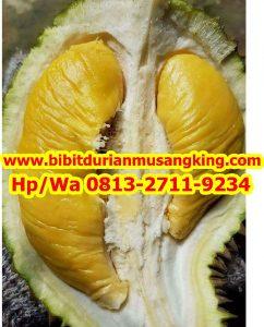 HpWa 0813-2711-9234, Jual Bibit Durian Bandung H. Tovix (2)
