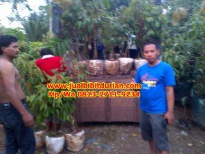 HpWa 0813-2711-9234, Jual Bibit Durian Bandung H. Tovix (3)