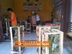 HpWa 0813-2711-9234, Jual Bibit Durian Bandung H. Tovix