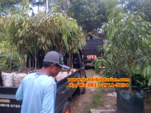 HpWa 0813-2711-9234, Jual Bibit Durian Bandung H. Tovix (6)