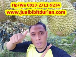 HpWa 0813-2711-9234, Jual Bibit Durian Bandung H. Tovix (8)