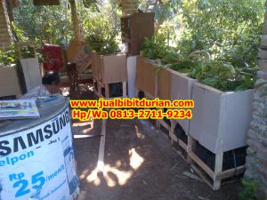 HpWa 0813-2711-9234, Jual Bibit Durian Banyumas H. Tovix.jpg