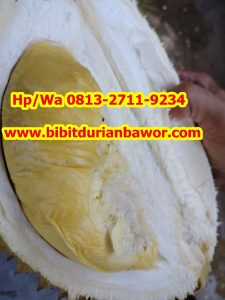 HpWa 0813-2711-9234, Jual Bibit Durian Bawor, Durian Bawor, Kutai Barat H. Tovix.jpg (10)