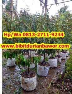 HpWa 0813-2711-9234, Jual Bibit Durian Jogja H. Tovix.jpg (2)