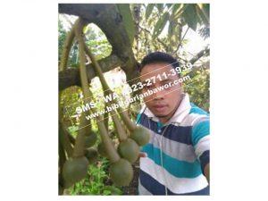 HpWa 0813-2711-9234, Jual Bibit Durian Medan H. Tovix