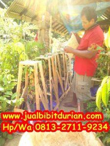 HpWa 0813-2711-9234, Jual Bibit Durian Medan H. Tovix.jpg