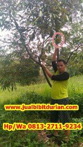 HpWa 0813-2711-9234, Jual Bibit Durian Yogyakarta H. Tovix.jpg (10)