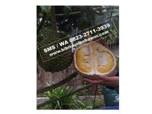 MURAH..!! HpWa 0813-2711-9234, Jual Bibit Durian Jember H. Tovix.jpg (5)