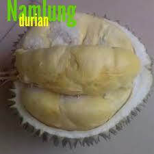 durian cumasi