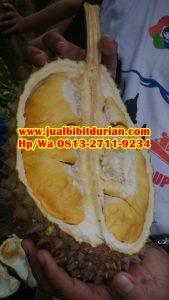 HpWa 0813-2711-9234, Bibit Durian Banyumas H. Tovix (4)