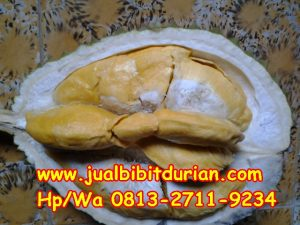 HpWa 0813-2711-9234, Bibit Durian Bawor Surabaya H. Tovix (12)