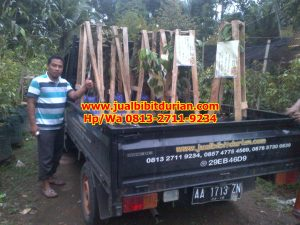 HpWa 0813-2711-9234, Bibit Durian Bawor Surabaya H. Tovix (2)