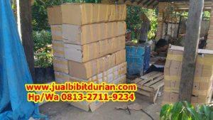 HpWa 0813-2711-9234, Bibit Durian Bawor Surabaya H. Tovix (3)